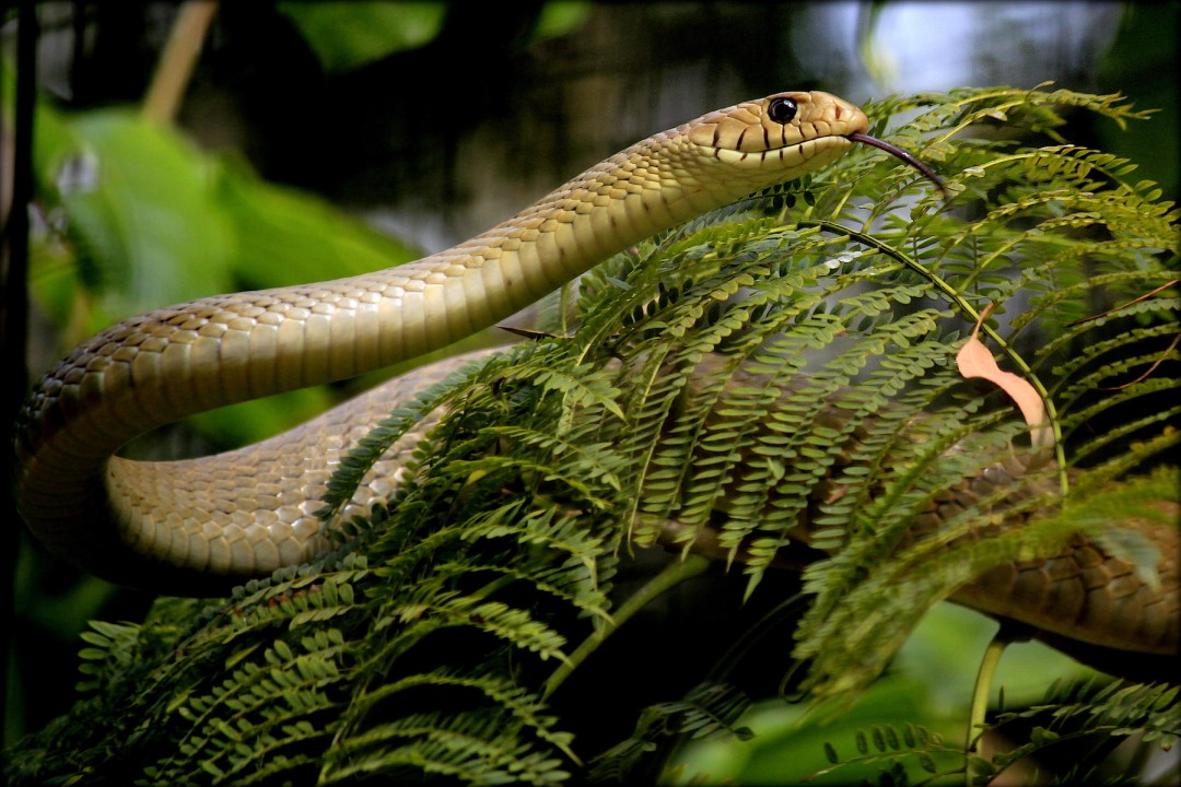 Urban Ecosystems: Snakes and the City