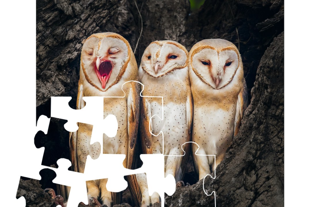 Owl the best for this jigsaw