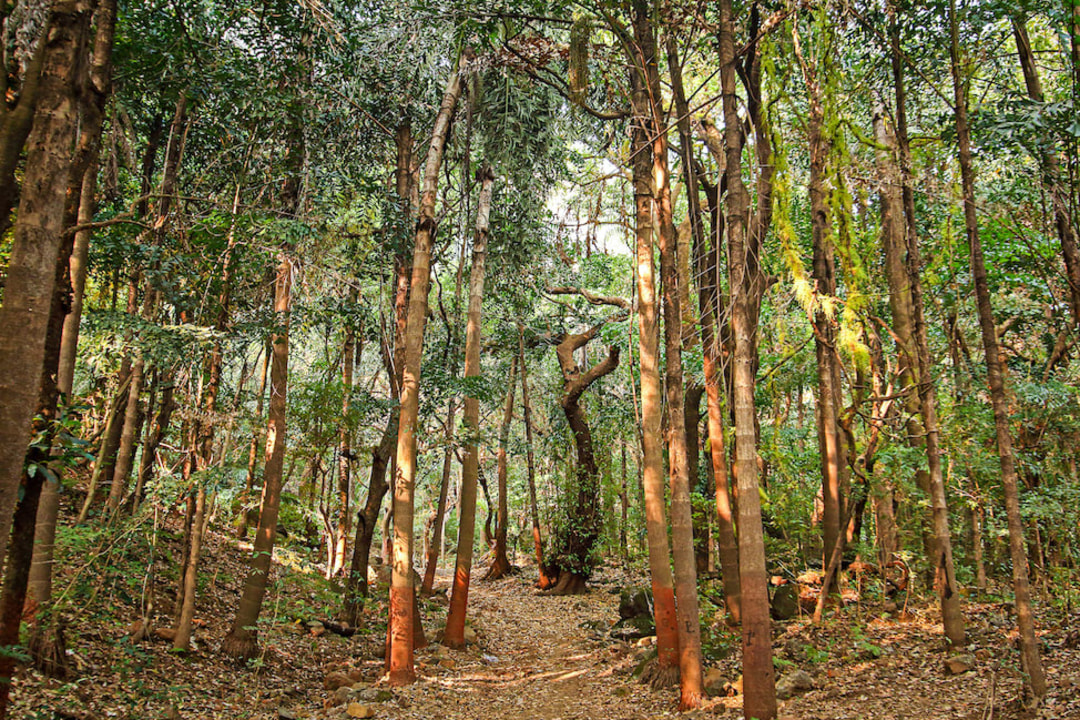 Trees and Toddy: In the Sacred Grove of Ajeevali
