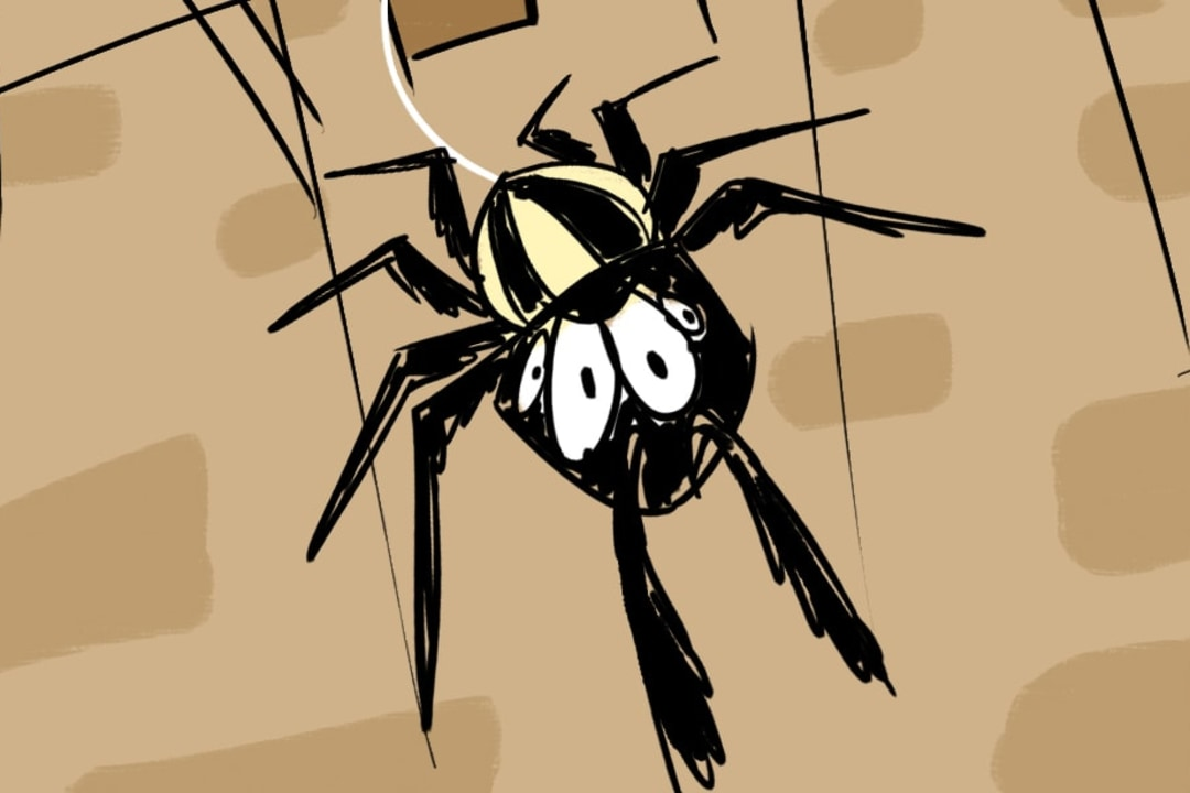 The Jumping Spider Eyes the Kohinoor