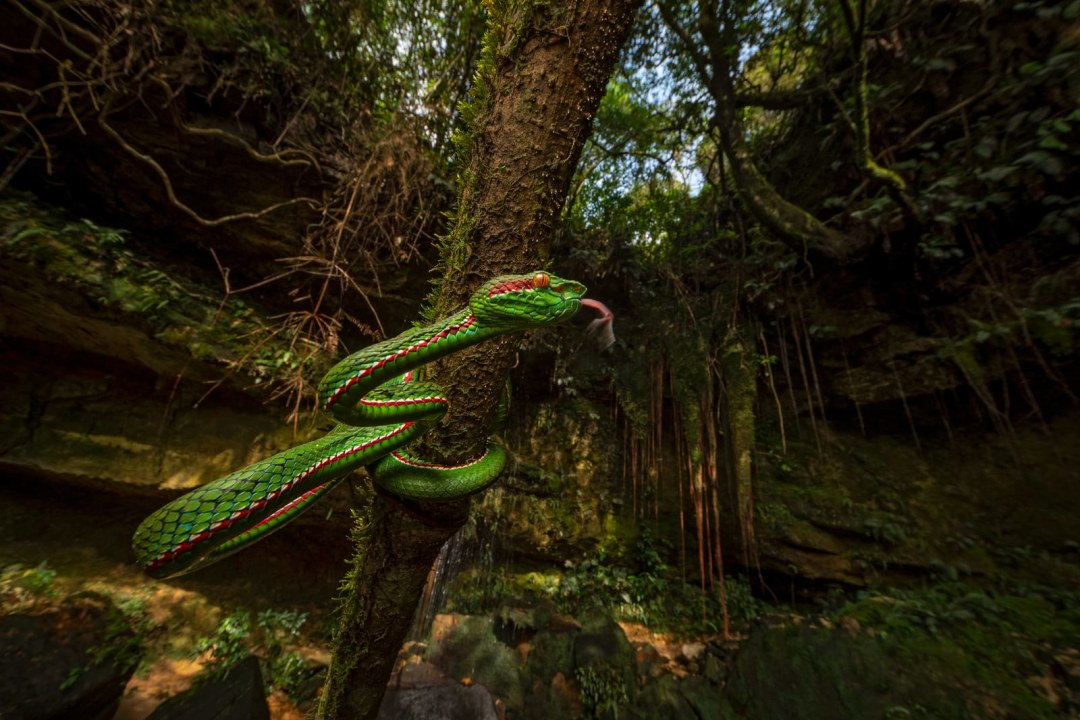 Wet and Wild: Herping in Meghalaya