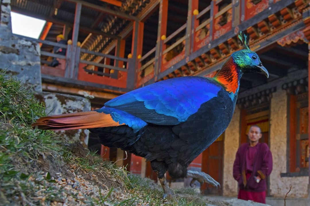 Coexistence with Critters: Lessons in Harmony from Bhutan's Countryside