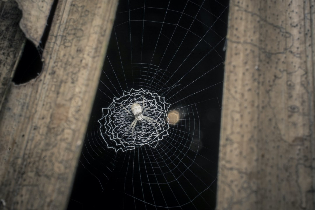 Spirals Through Time: Evolution of Orb-weaver Webs
