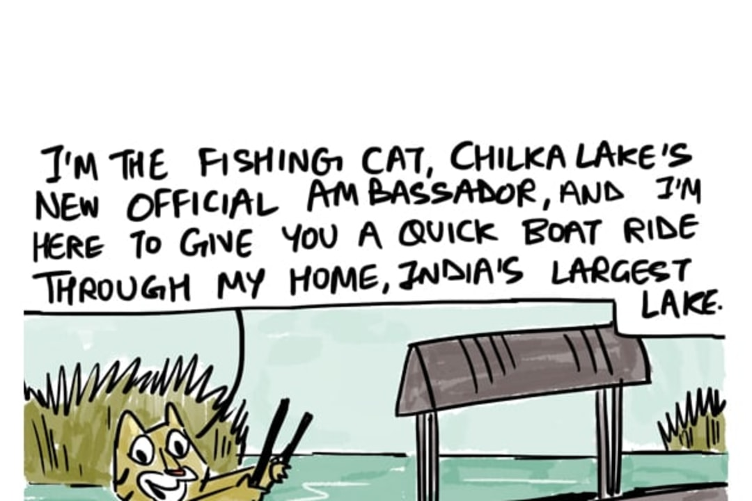 Meet Chilka Lake's New Ambassador: The Fishing Cat