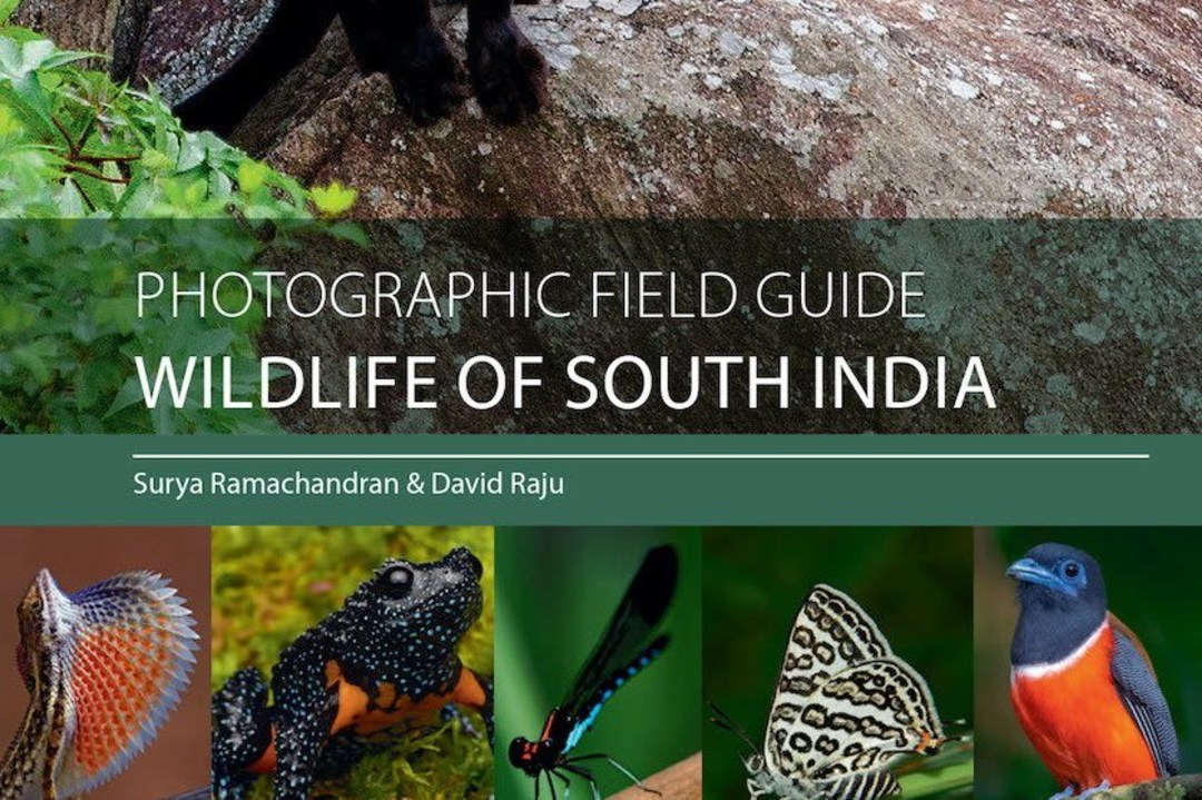 The Wild Stars of South India