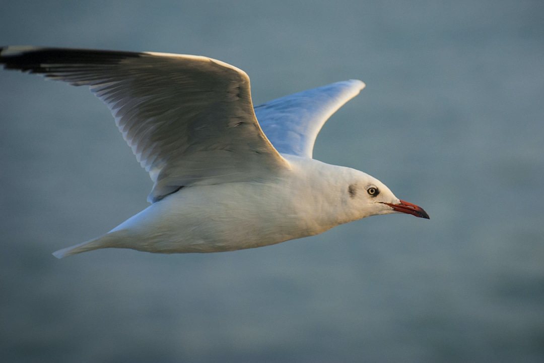 Mischief Makers: The Disgraceful Antics of Graceful Gulls