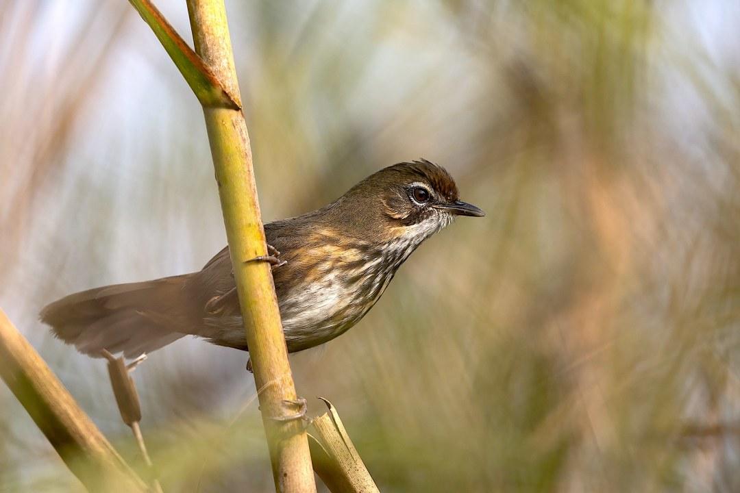 Fragile and Fantastic: The Bird Paradise of Dibru-Saikhowa