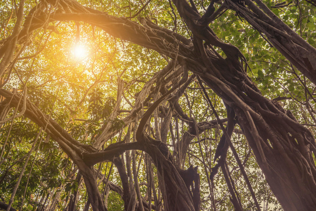 Surviving the Pandemic, One Tree at a Time