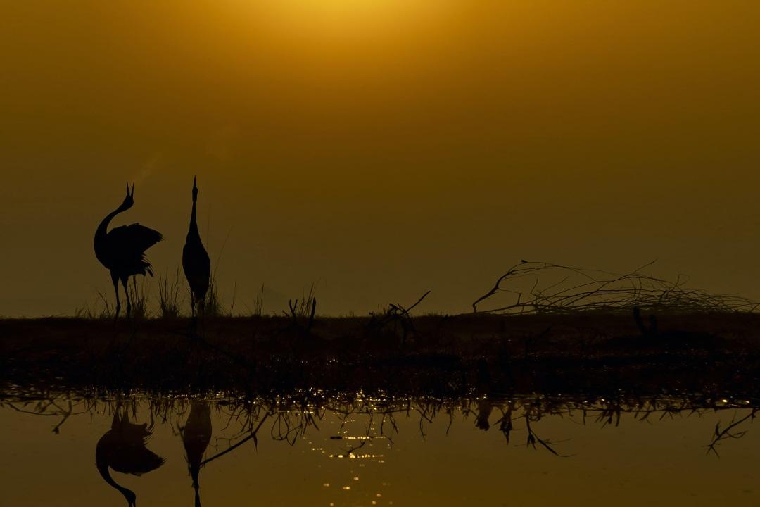 Bharatpur: Memories of an Inveterate Birder