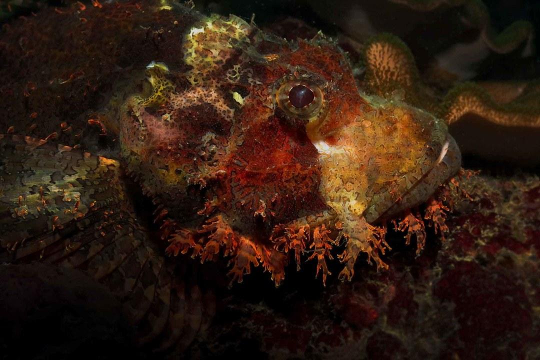 Common Venomous Reef Creatures of the Shallow Seas
