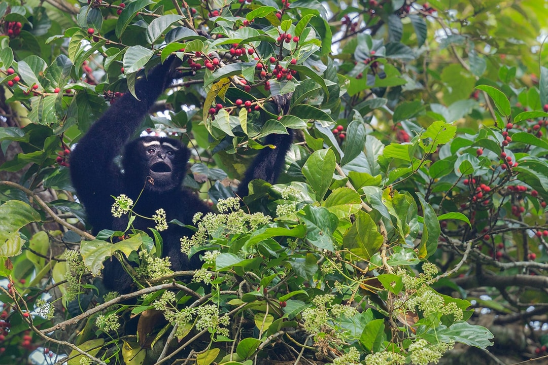 Anatomy of a Rainforest: Life at the Top