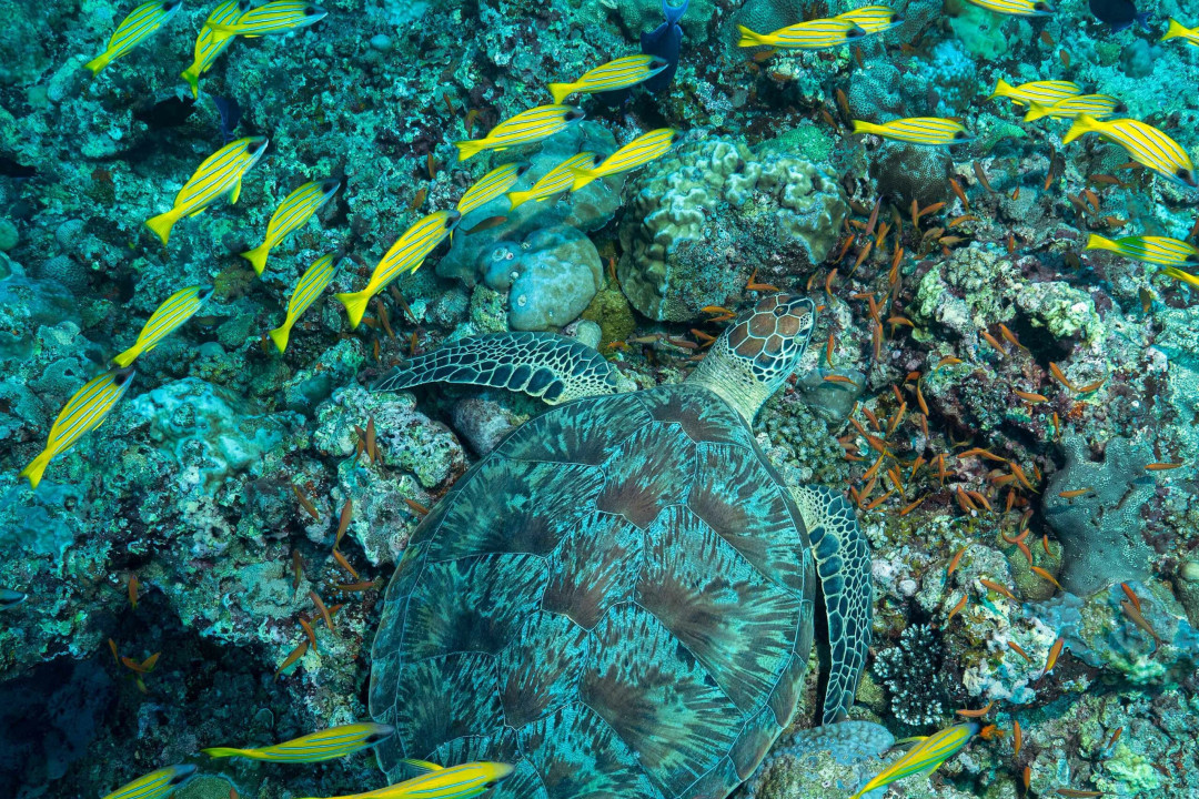 The Conservation Paradox: Missing the Meadows for the Green Turtles