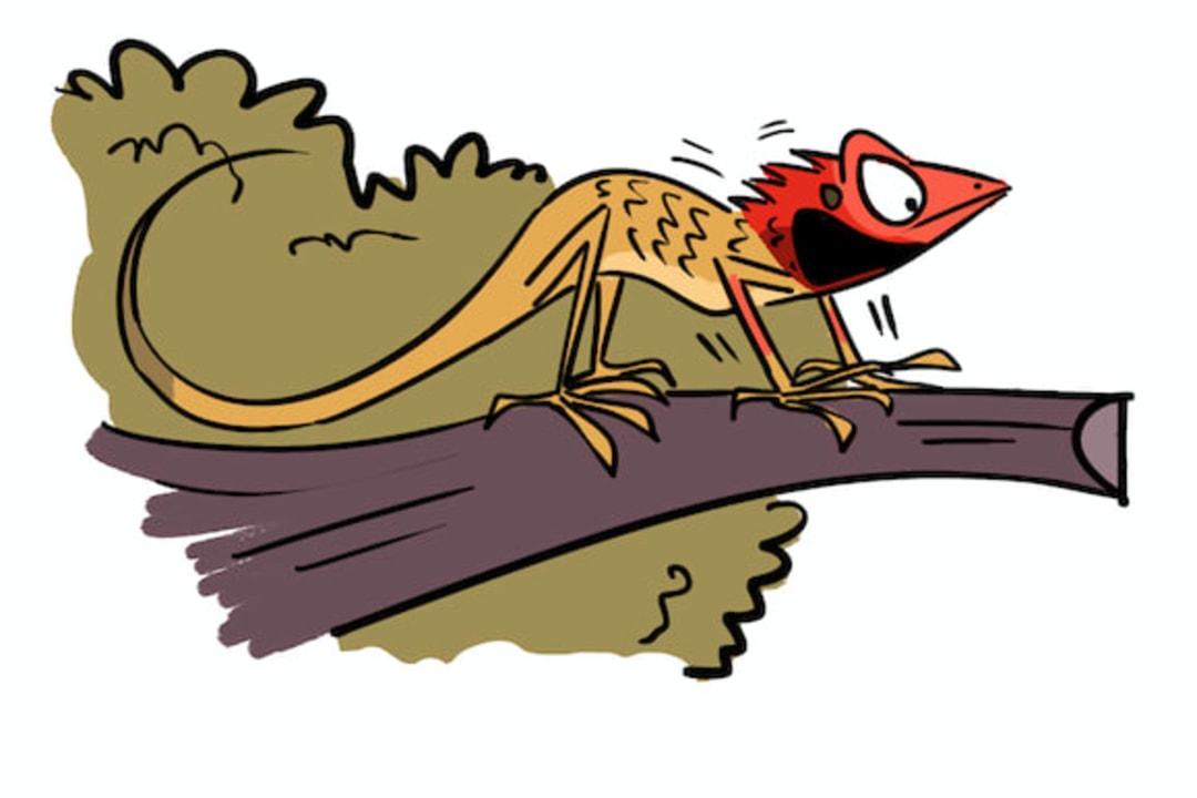 How to Charm a Garden Lizard