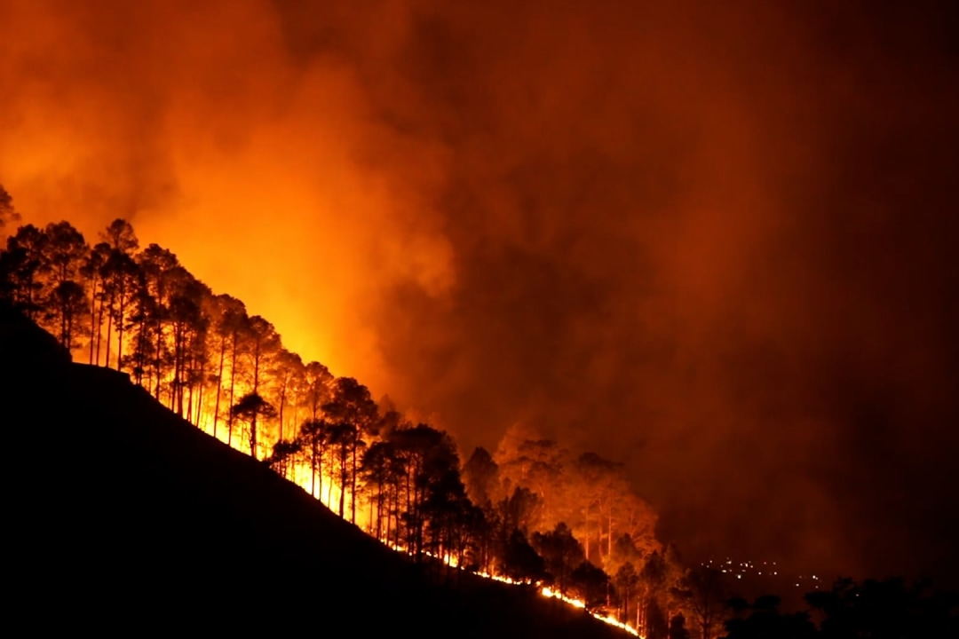 What Made Wildfires Rage in 2021?