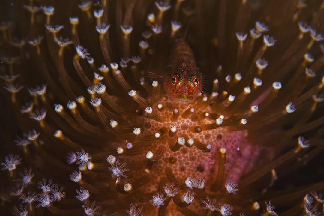 Tiny But Tenacious: Micro Life on the Andaman Reef