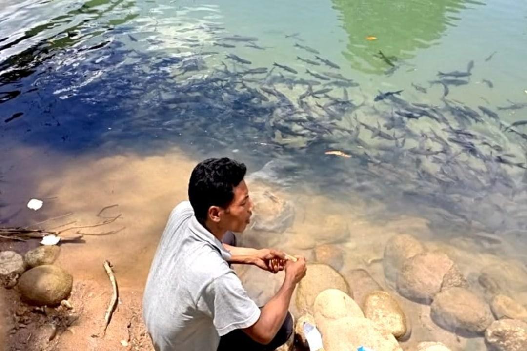 Community Efforts Guide Mahseer Protection in Meghalaya