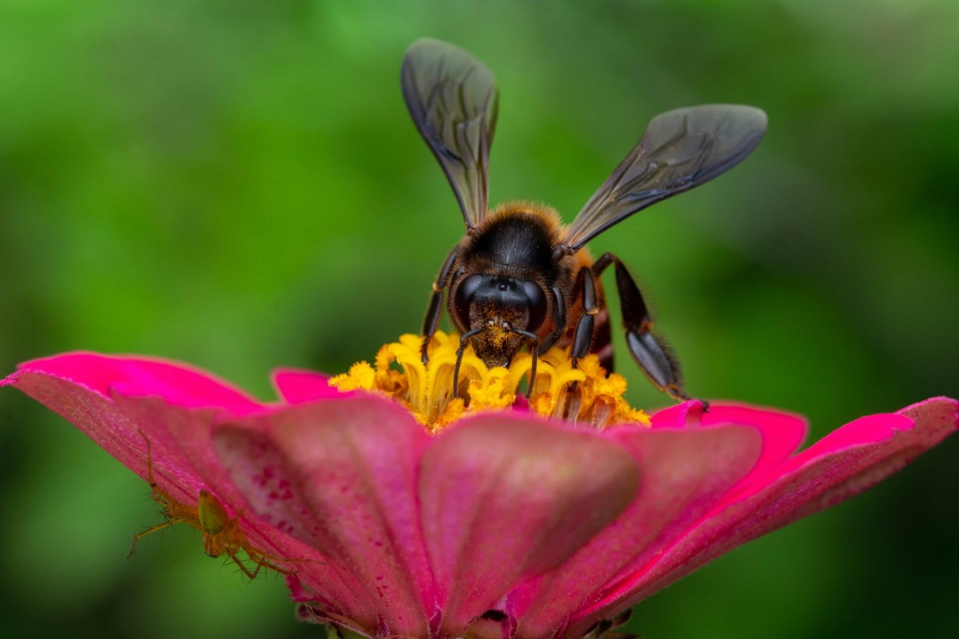 Wild and Free: Where the Rock Bees Roam