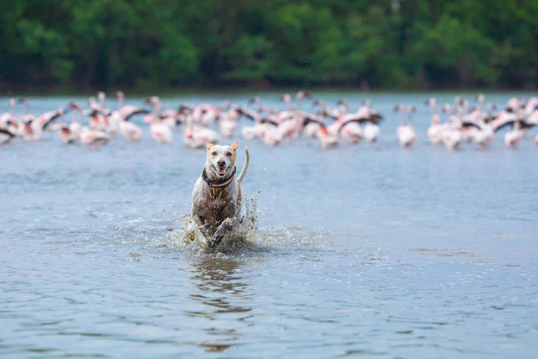 Clear and Present Danger: Managing Free-ranging Dogs