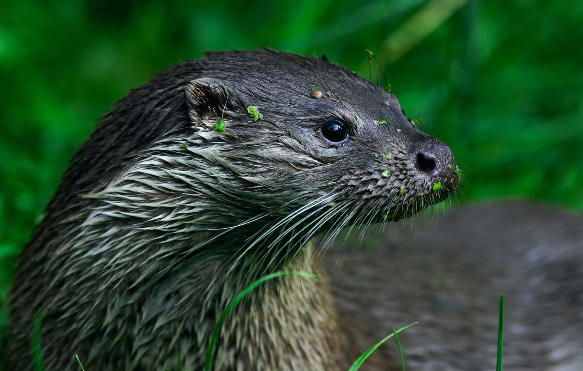 A Hidden Life: The Mystery of the Eurasian Otter