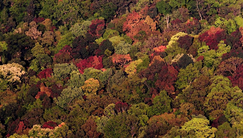 Splendid Sojourns in Silent Valley National Park