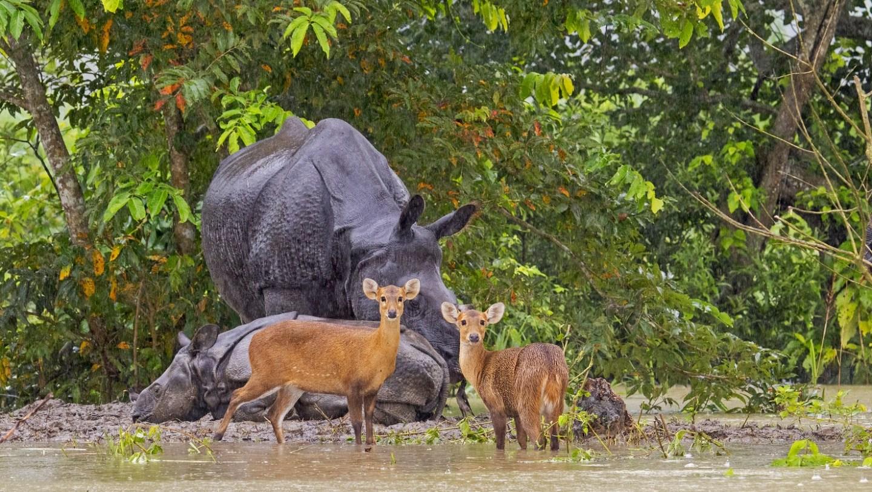 When the Big Flood Came to Kaziranga