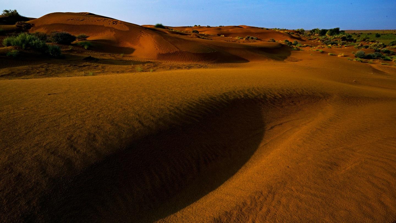 Desert National Park: The Abundant Life of the Sand and Scrubs
