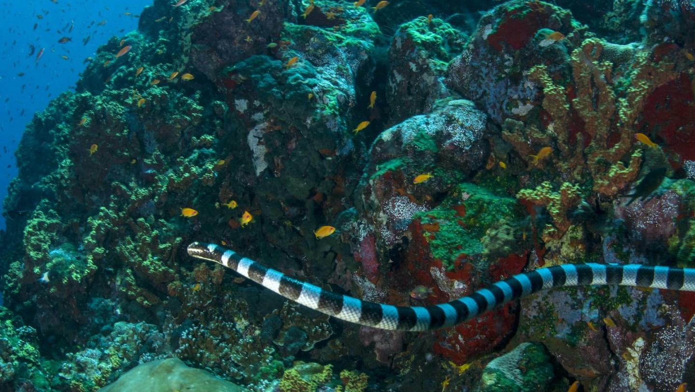Eel Hunter: The Amphibious Life of Sea Kraits