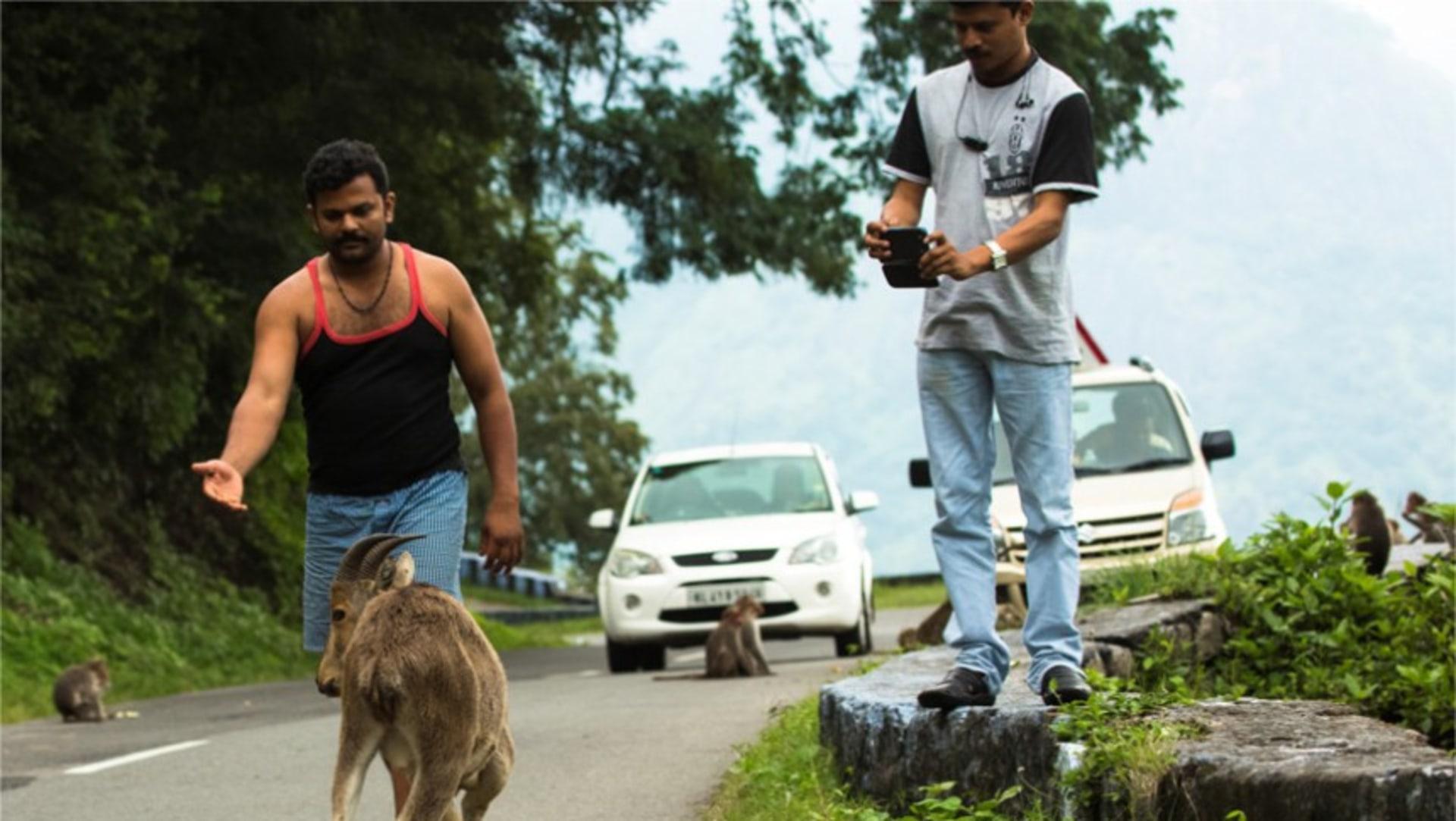 An Appeal to Tourists: Stop Feeding the Nilgiri Tahr