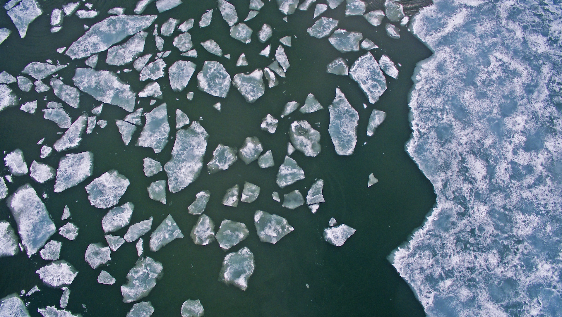 Beneath the Ice: Diving into the Arctic Waters of Svalbard