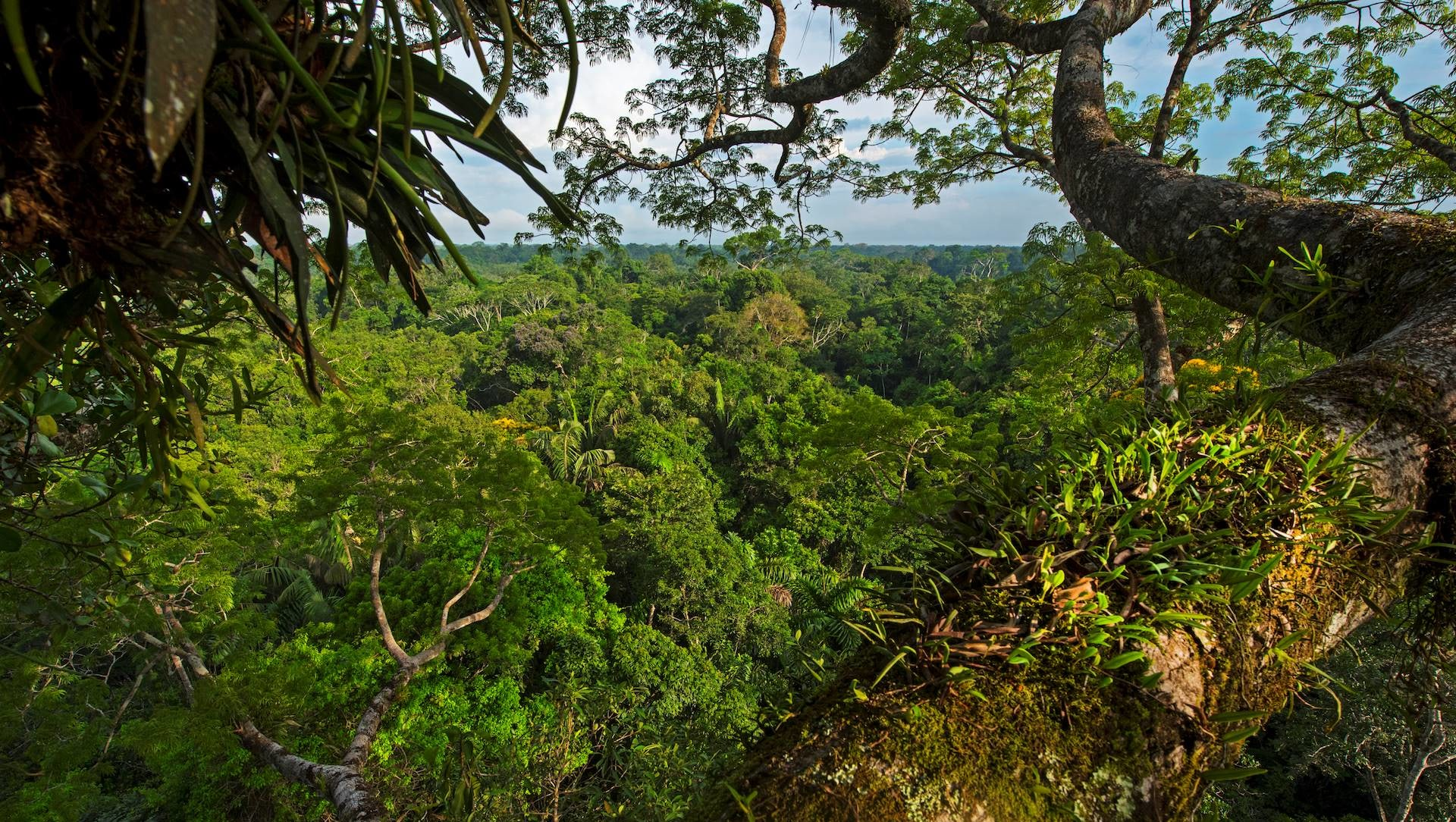 Ancient Wisdom: Lessons from the Amazon Forest in Ecuador