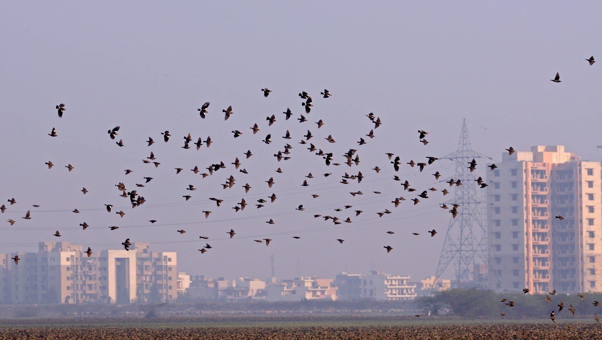 Basai Wetland Thrives Just a Short Hop From Gurugram's Glitzy Malls