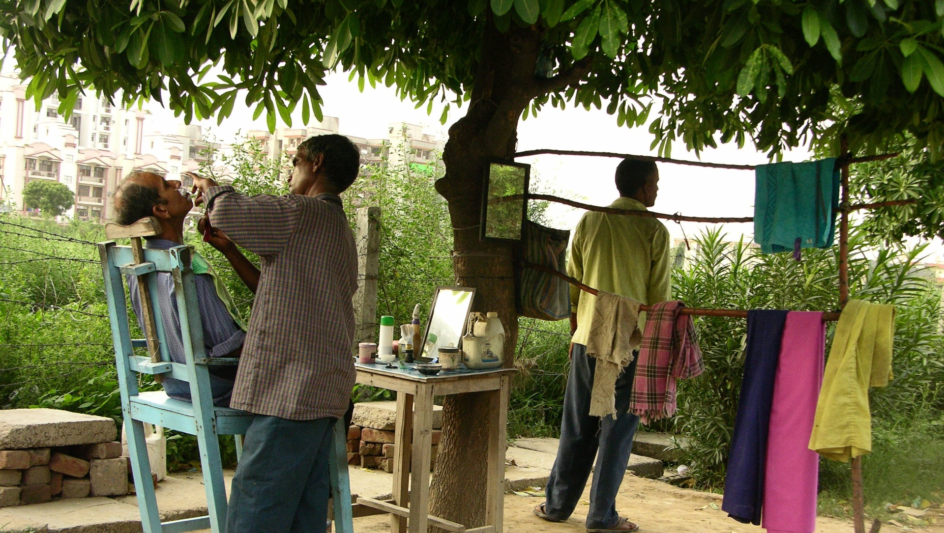 Branch Offices: The Working Trees of Delhi