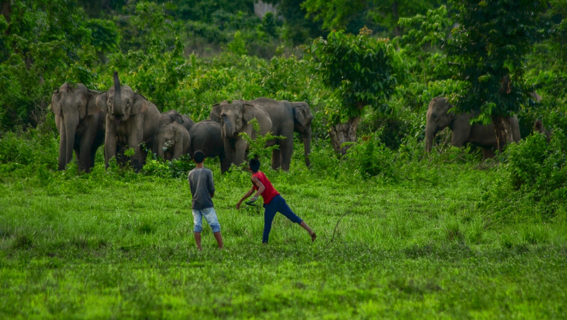 In a Tight Corner: The Dwindling Elephant Herds of Assam