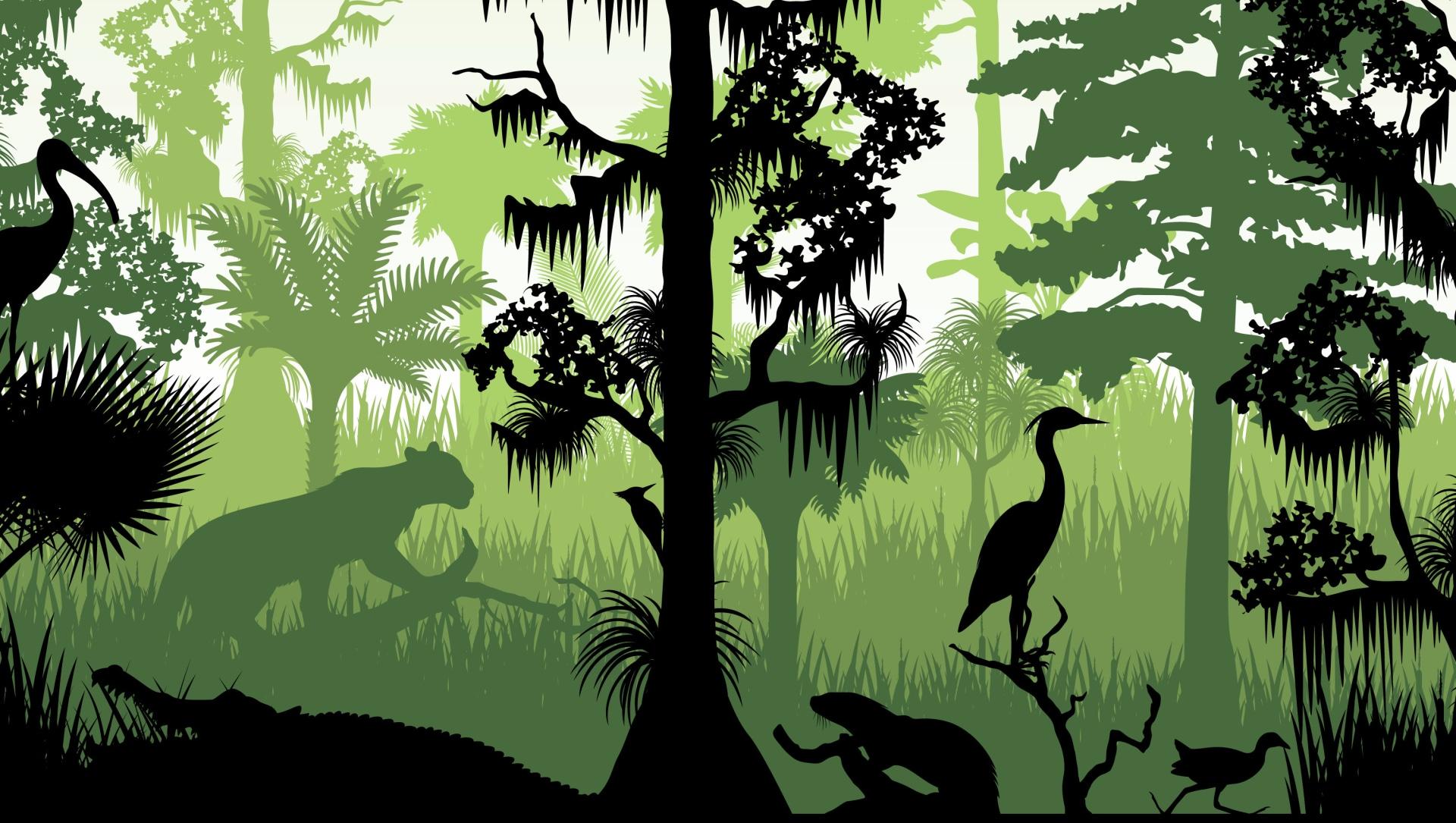 What is Habitat Fragmentation?