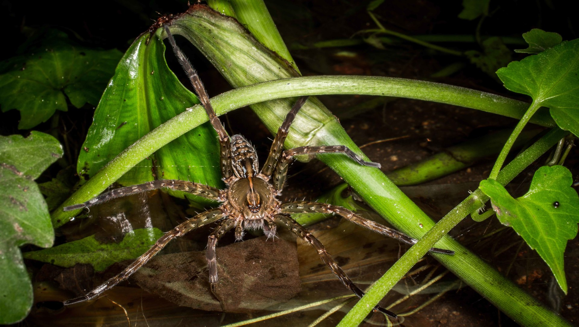 The Spider's Wharf: Tales of a Freshwater Fishing Enthusiast