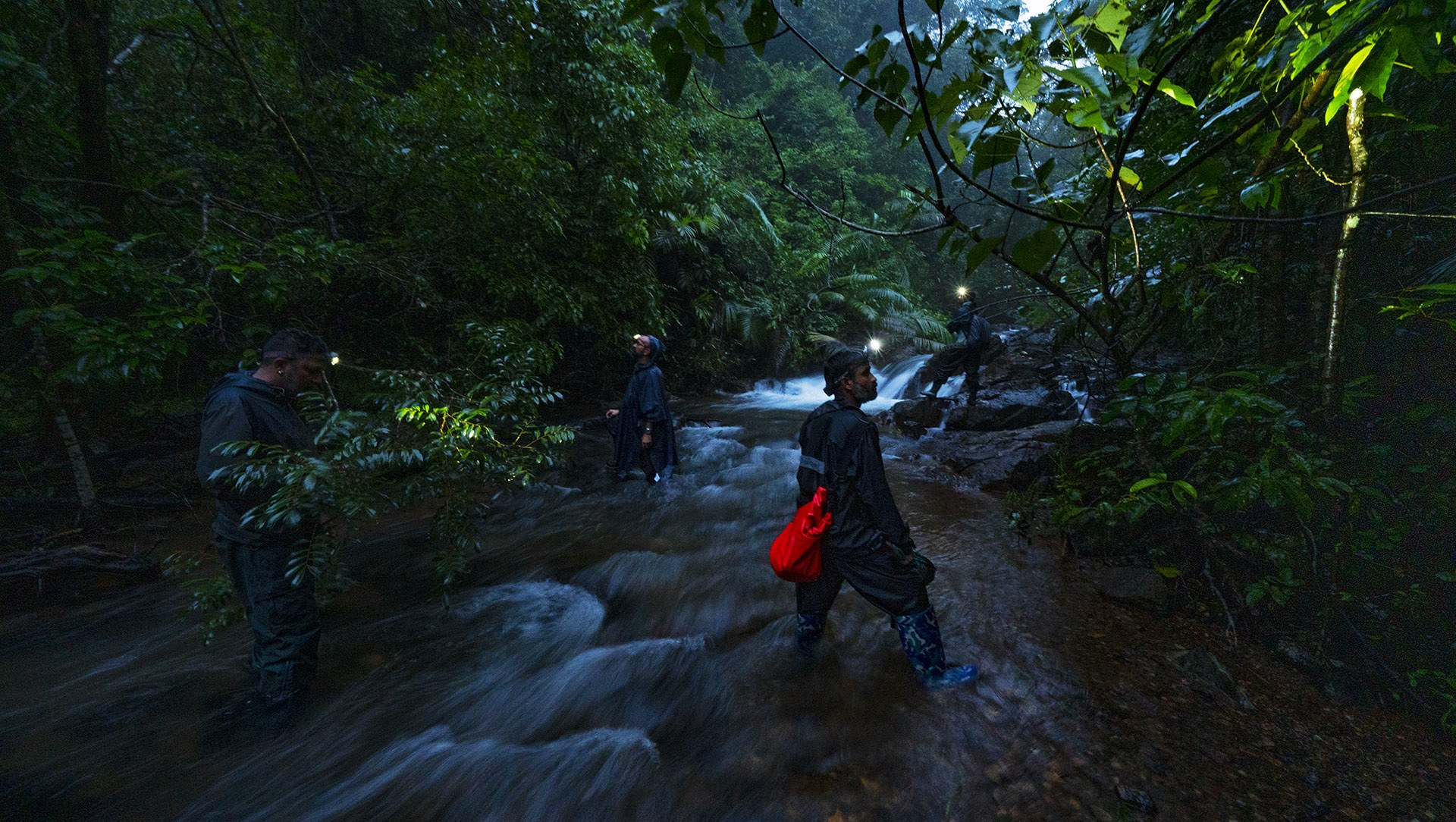 Behind the Lens: Shooting the Residents of a Rainforest