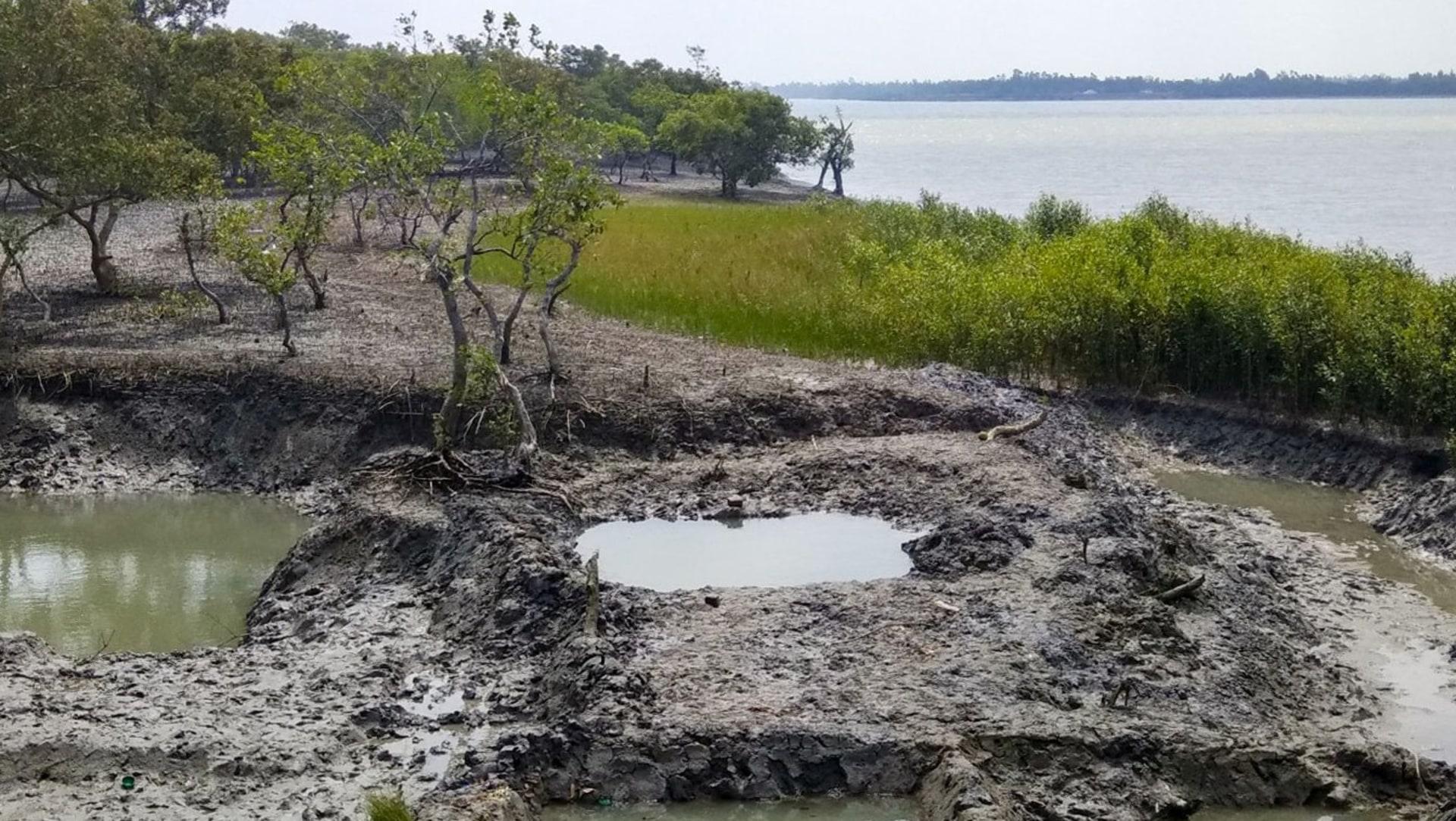 Sundarbans: 'Not a blade of grass grew…'