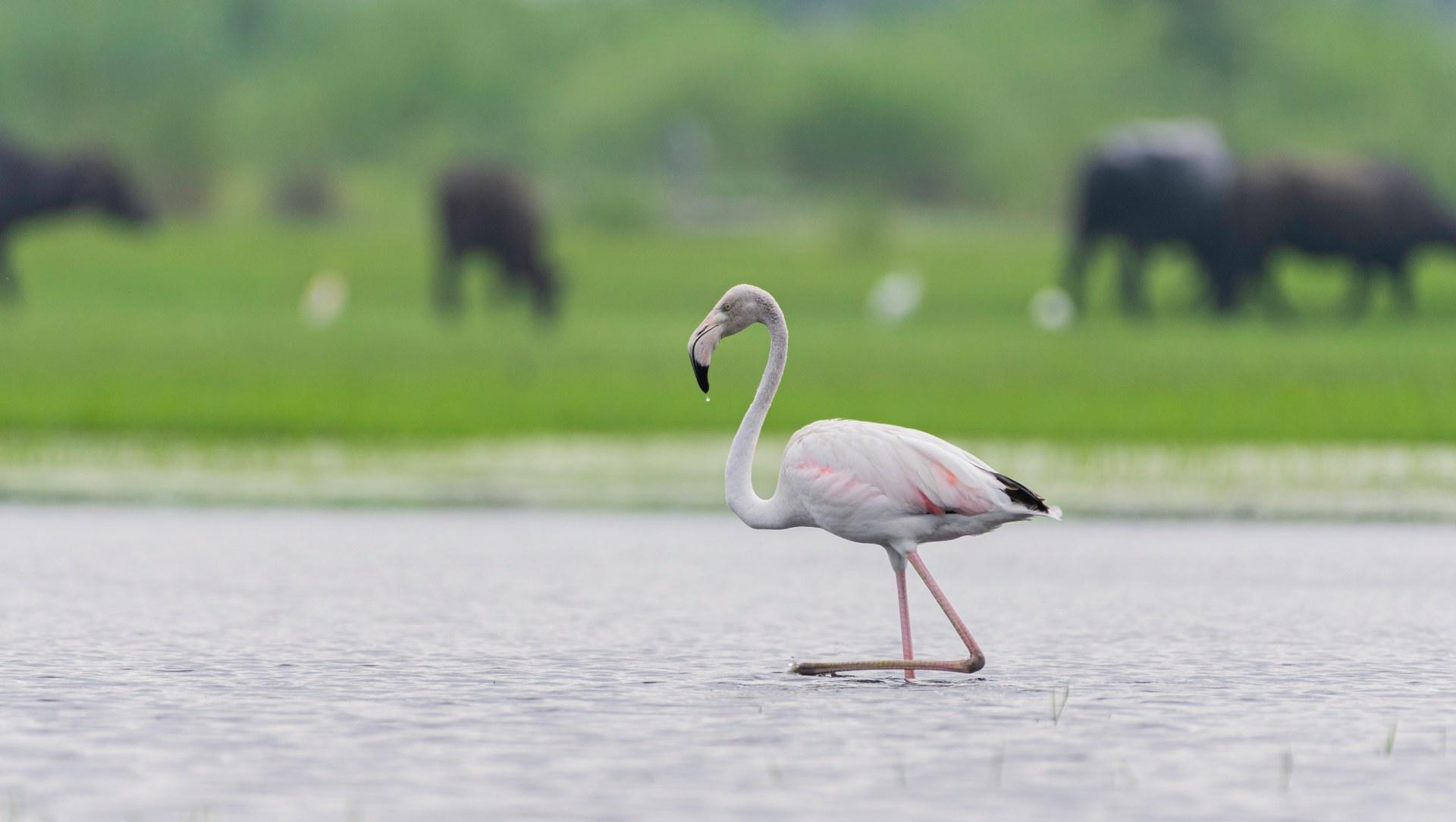 On a Wing: Dhanauri Wetlands, a Birdwatcher's Wonderland