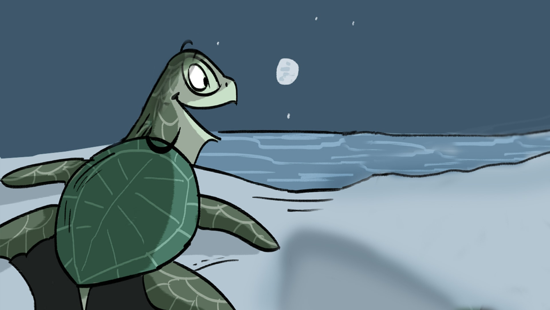 The Sea Turtle's Annual Reunion