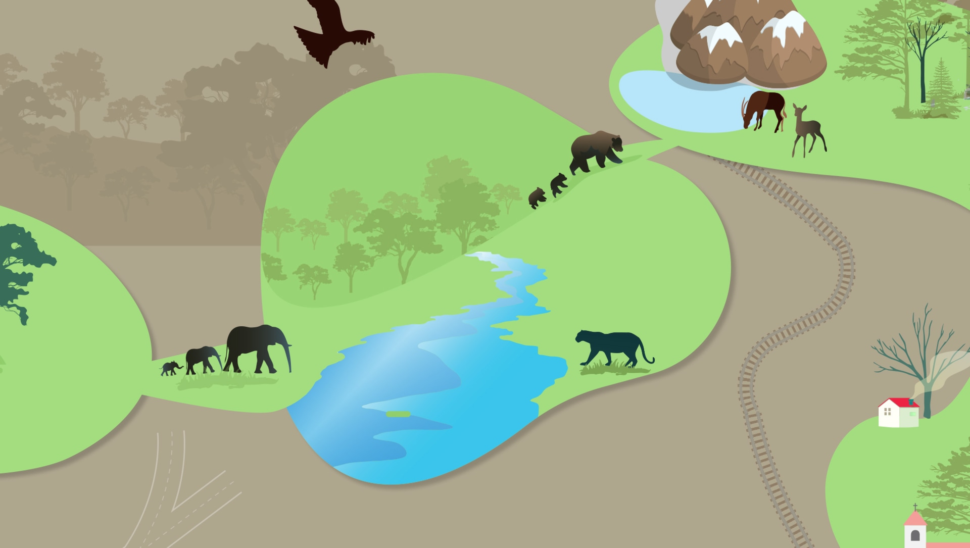 Wildlife Corridors Explained