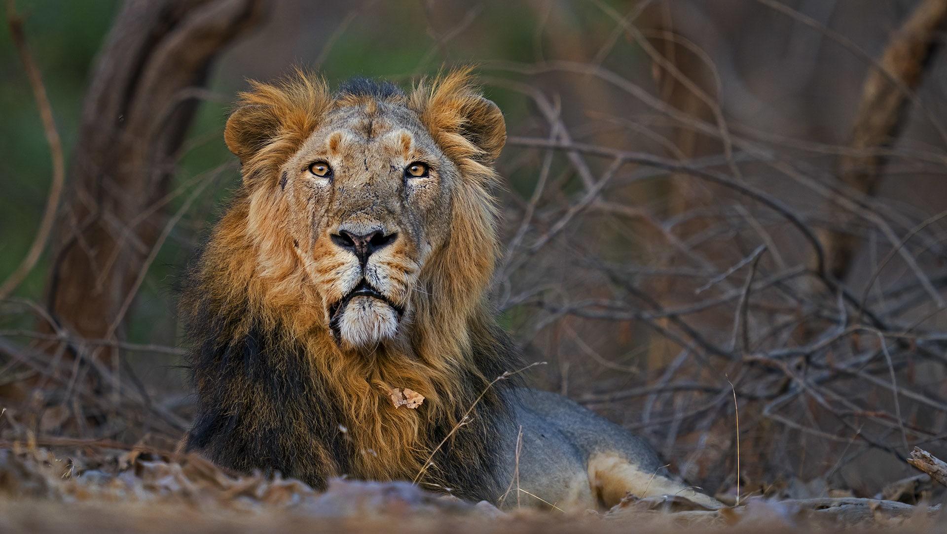 The Guide: Gir National Park