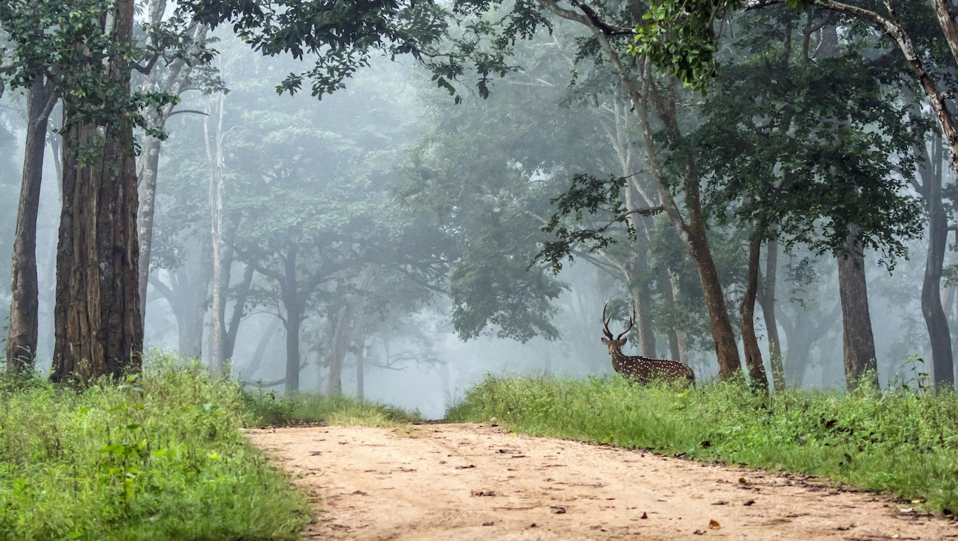 The Guide: Nagarhole National Park