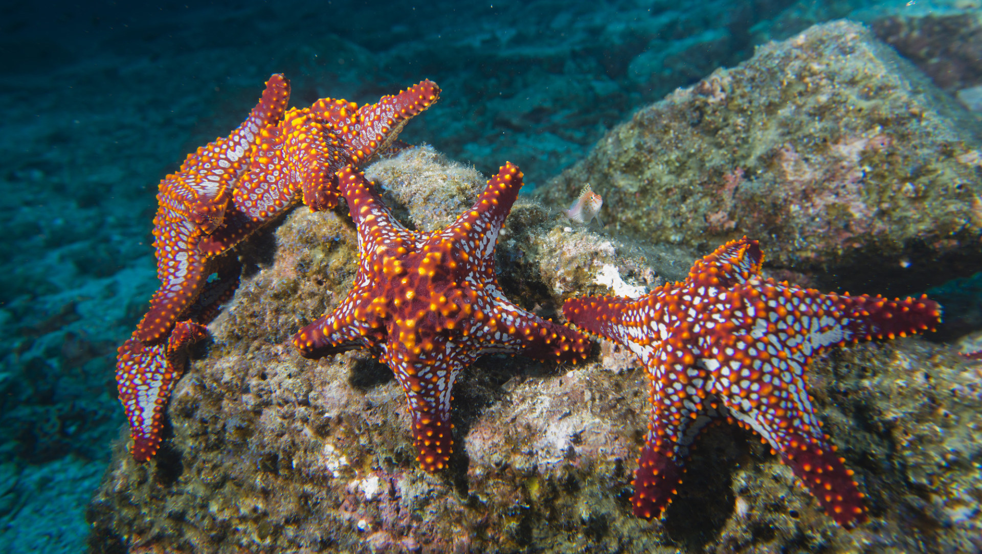 Did You Know? Starfish and How They Regenerate