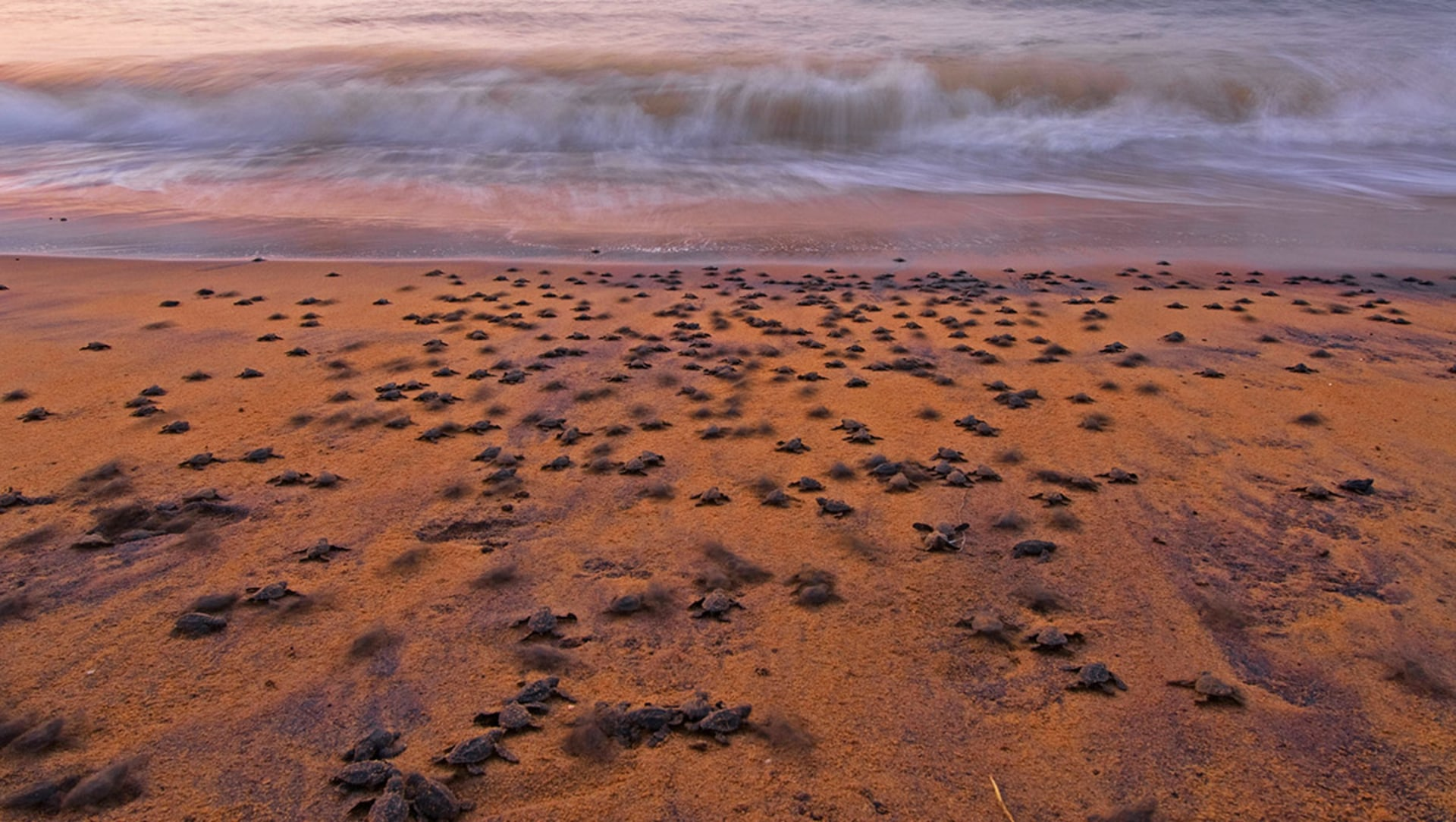 A half century of sea turtle conservation