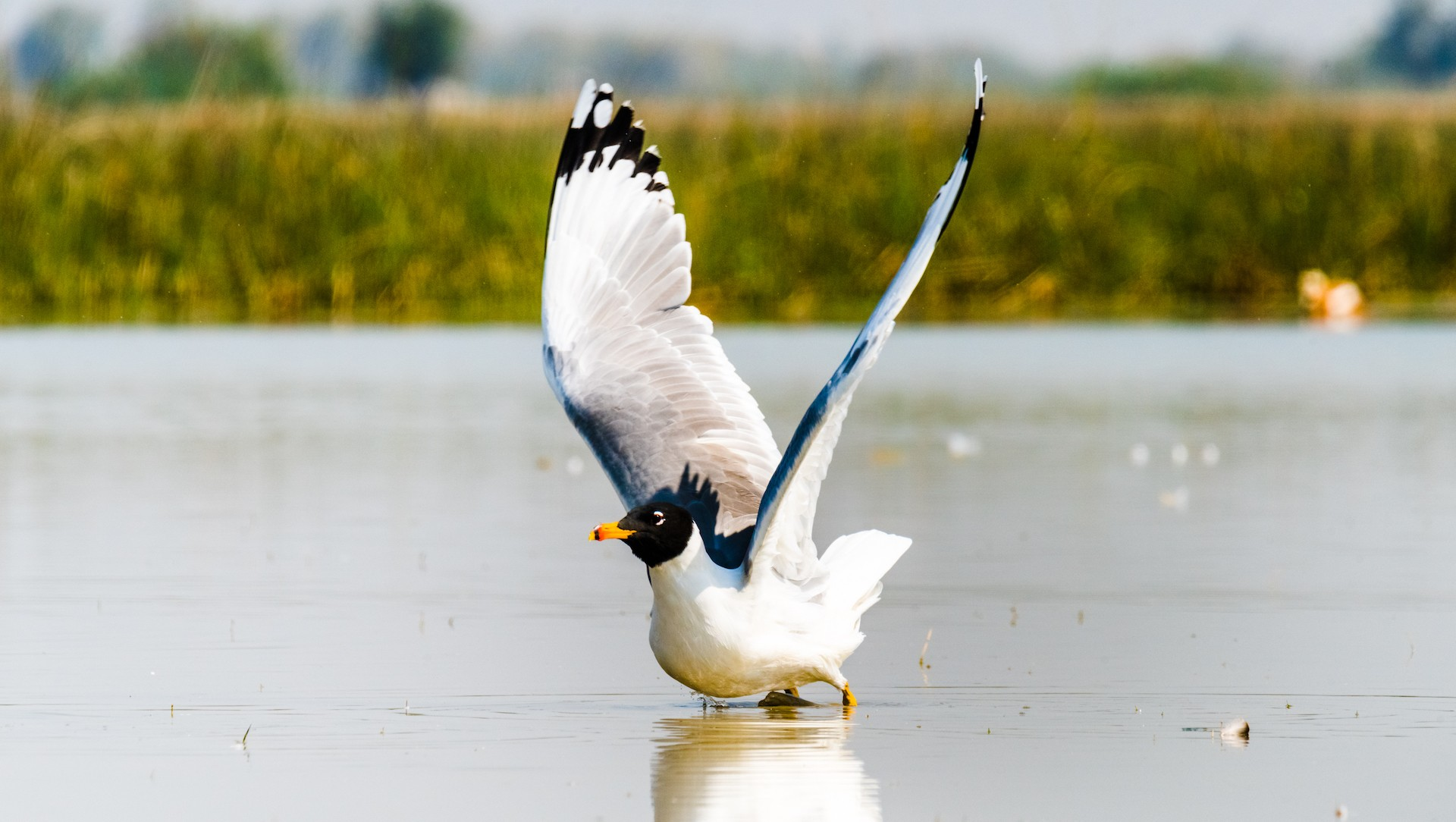 The Guide: Nalsarovar Bird Sanctuary
