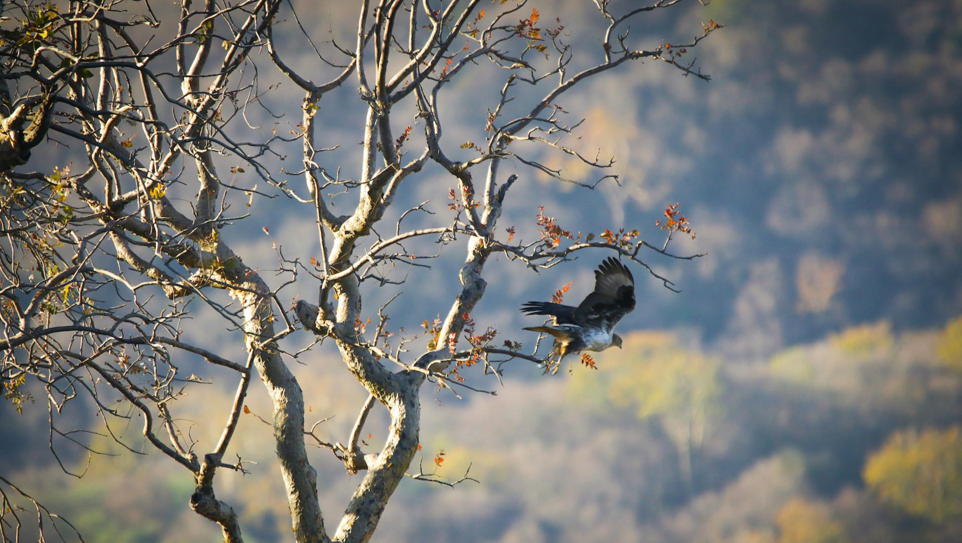 Avian Windfall at Todgarh-Raoli and Kumbhalgarh