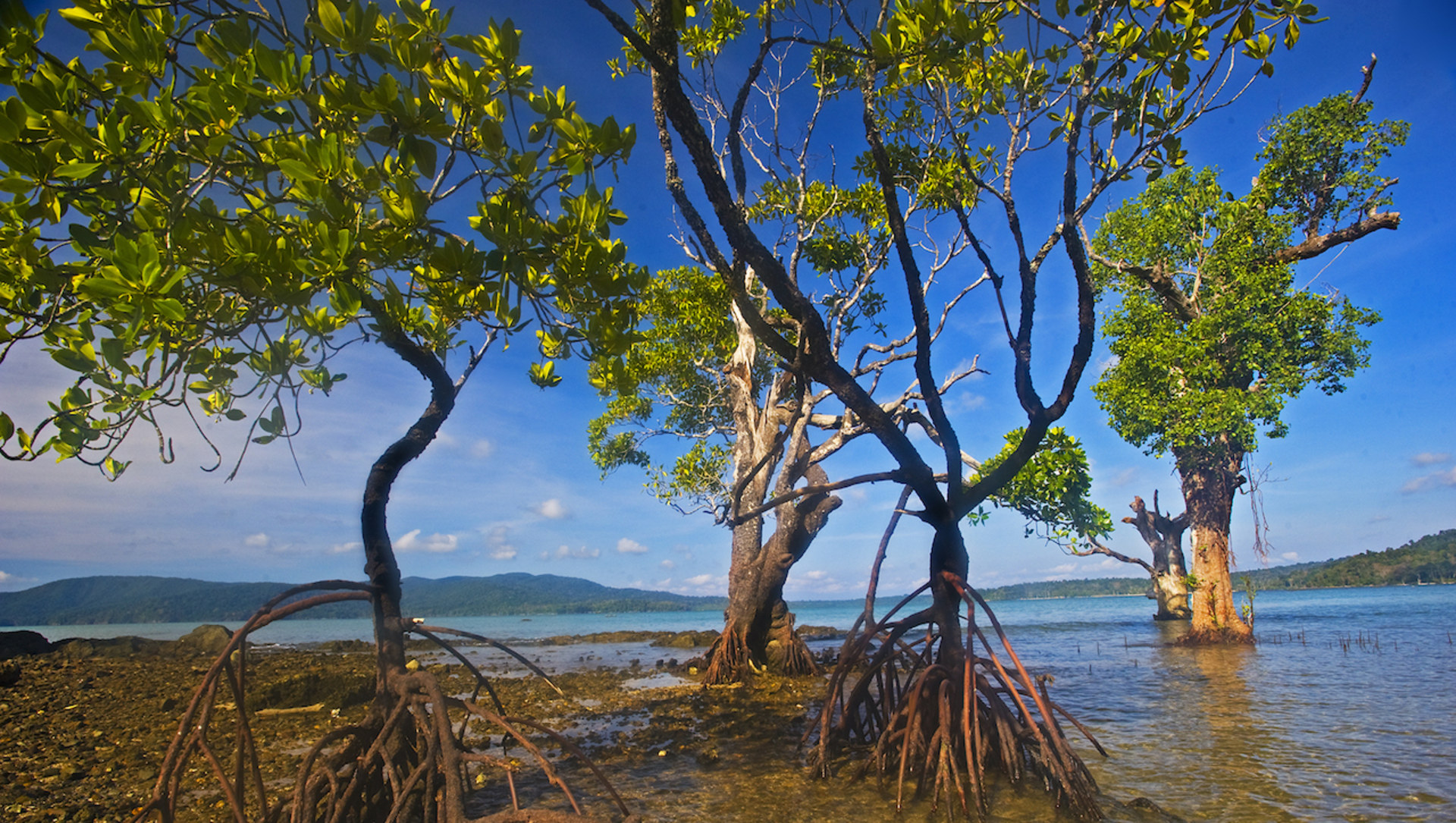 Sentinels of the Coast: The Mangroves of Andaman Islands and Tamil Nadu