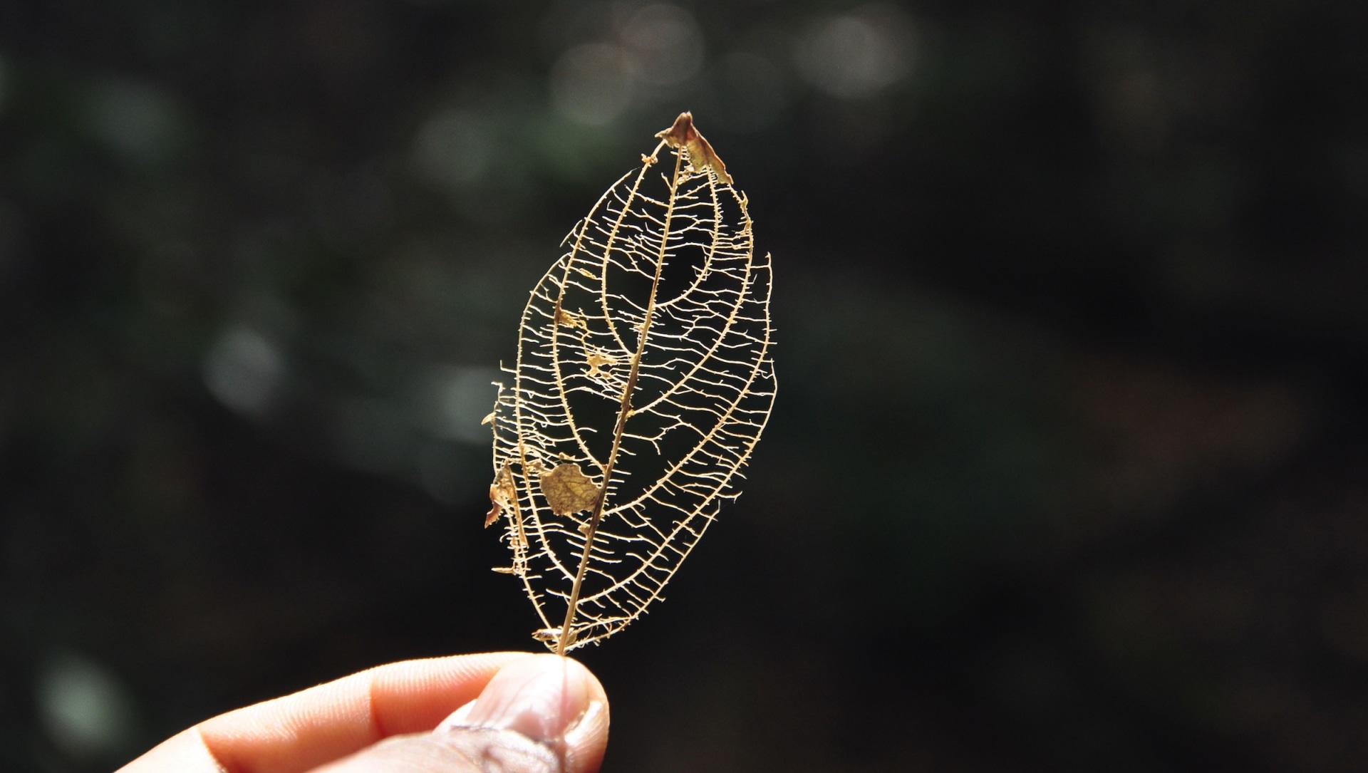 Dismantling a Misnomer: Do Fallen Leaves Litter?