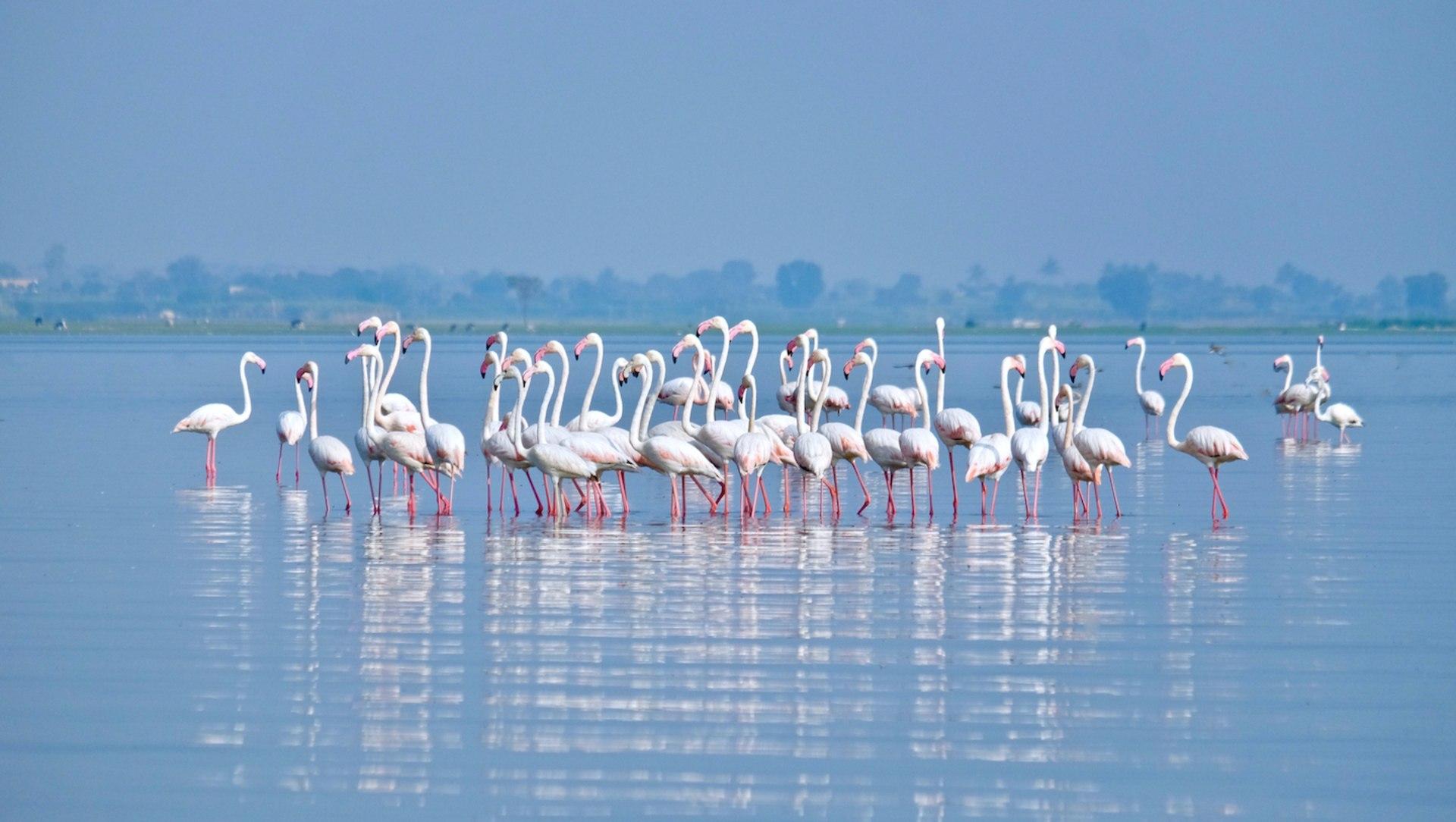 The Guide: The Backwater of Bhigwan