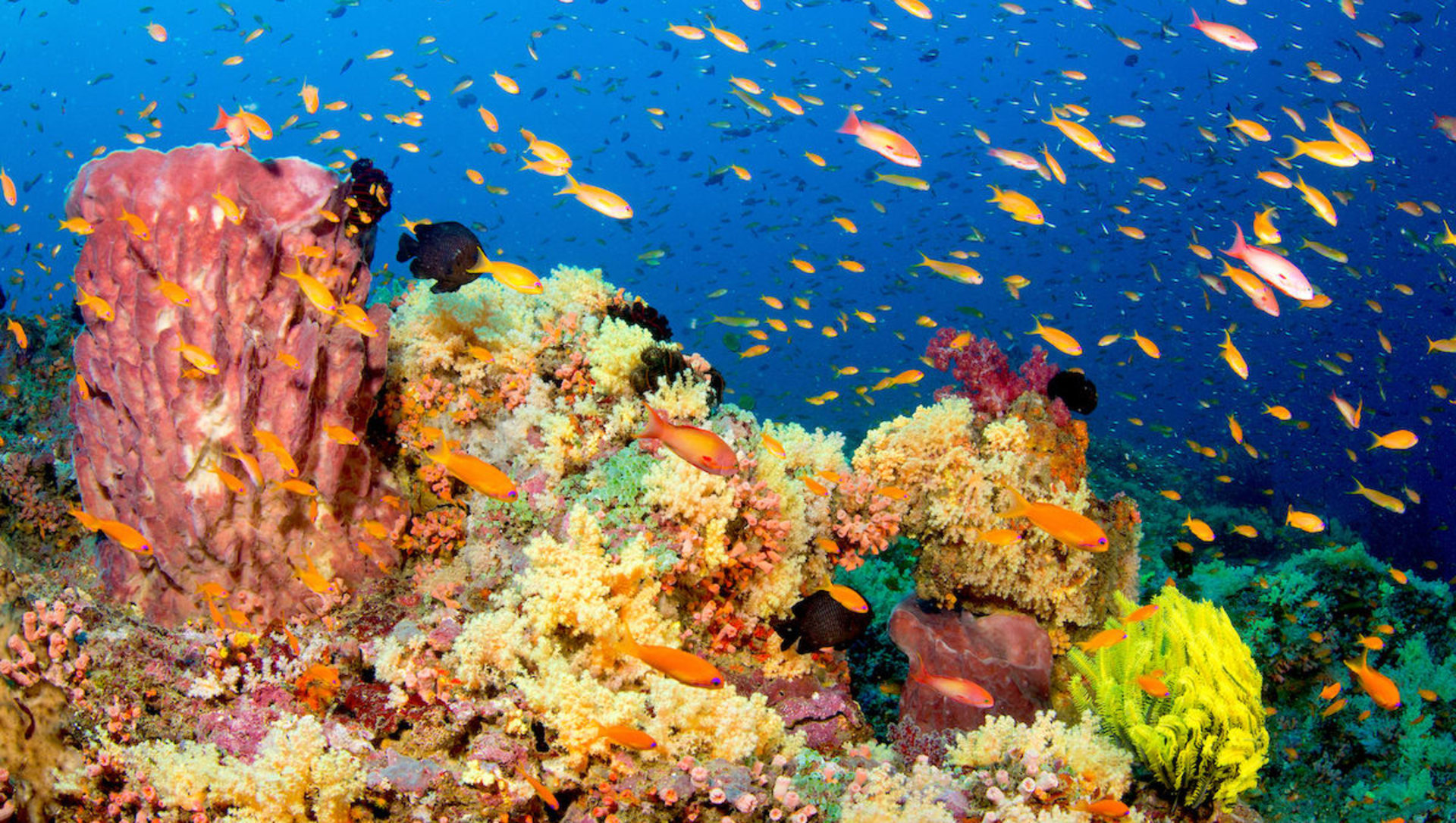 Fishy Phenomena: Sex on the Reef
